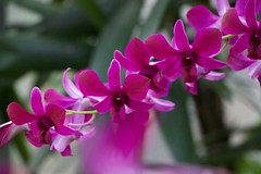 Orchids & More (swanson.matt) Tags: garden gardening plant nature greenhouse conservation naturist natural purple orange red green yellow flora floral flowering vegitation