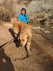 00100lPORTRAIT_00100_BURST20181228151102061_COVER (KevinXHan) Tags: zions national park dog golden retriever cute aww parus trail hike walk nature outdoors google pixel3 photoblog photodiary
