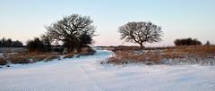 Two Small Trees (stevedewey2000) Tags: salisburyplain wiltshire landscape spta snow treescape trees sptaeast 2351 sigmadp2 merrill