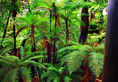 Forest, Hamurana Springs, Rotorua, North Island, New Zealand (klauslang99) Tags: day fern foliage frond growth location lush nature newzealand other outdoor plant scenic tree tropical vegetation water hamuranasprings rotorua northisland forest horizontal klauslang