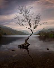 Lone tree on Llyn Padarn (david.travis) Tags: unitedkingdom snowdonia tree cloud water landscapephotography reflection scenic lake weather wales mountain clouds