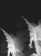 procession (BleakView) Tags: angel bw blackandwhite bleakview bleak demon statue death dying grave graveyard heaven hell god jesus wings ghost funeral procession film grit grain 35mm
