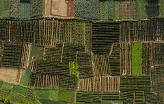 Farm Grid (songallery) Tags: aerial aerialgraphy agriculture china chinese crop directoverhead dji drone farm field green m2pb mavic2pro peasant village 中国 農地 農村 農業 農田 cn grid