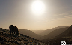 Horse Grazing (Mike House Photography) Tags: black mountains landscape photography brecon beacons view panorama hills walks hiking outdoors sunny bright brisk morning glow blue sky grass trees valley clouds white