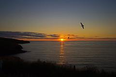 sunset - Port Isaac, Cornwall, England - July 2018 (Dis da fi we) Tags: sunset port isaac cornwall england fishermans friends itv series doc martin