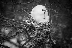 Backyard Snow Photos (Phil Roeder) Tags: desmoines iowa snow snowfall blizzard winter blackandwhite monochrome canon6d canon50mmf18 nest birdnest