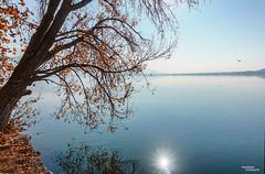 Automn (Vasdokas) Tags: vasdokas greece kastoria nature tree lake reflection colors automn macedonia