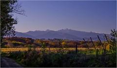 Le chemin de la Pierre Blanche (MyLavie) Tags: automne novembre chemin couleurs pyrenées montagne monein bearn bois arbres pentax myla mylenelavie
