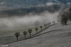 Alignement (paul.porral) Tags: flickr ngc winter landscape trees nature natur snow suisse switzerland jura ambiance mist mood brume brouillard foggy weather
