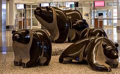 Bear Family -- Airport Public Art (DCZwick) Tags: bearfamily art sculpture publicart calgaryinternationalairport internationalterminal yyc calgary alberta canada pentaxq7 02standardzoom