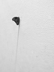 Home|2018 (Shahrear94) Tags: blackandwhite black blackwhite monochromatic monochrome minimalistic minimal insect butterfly flicker dhaka simplistic white wall bangladesh visual art