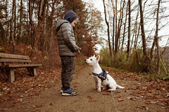 David und Nando... (hobbit68) Tags: sohn son dog hund fujifilm xt2 wald forest baum trees gassi holz holzbank frankfurt fechenheim westhighlandterrier wessi