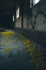 Yellow Caps (IAmTheSoundman) Tags: jake barshick sony a99 m42 takumar manualfocus cleveland ohio urbanexploring urbex abandoned