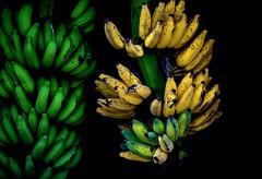 Gone Bananas (ACEZandEIGHTZ) Tags: nikon d3200 bananas bunches macro closeup blackbackground tropical fruit yellow green coth coth5 sunrays5
