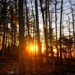 winter sunrise (Jos Mecklenfeld) Tags: wandelen hiking winter natuur nature bos forest zonsopkomst sunrise