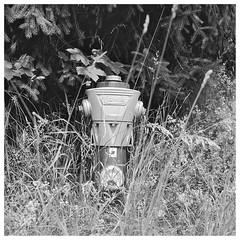 Austrian Fire Hydrant. Rolleicord V / Ilford HP5+. (Tony Joness) Tags: analogue analog austria alpbach bw bnw blackandwhite blackwhite develop developer darktable epson epsonscanner film fomafix hp5plus hp5 ilford ilfordhp5plus monochrome mono mediumformat rodinal rollfilm scanner scan square tlr twinlensreflex v550 yashicamat yashica 120filmcamera 120 6x6