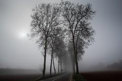 Fog (Josep Lluis RG) Tags: ambient road trees fog landscape