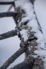 Snowy (noname_clark) Tags: rockymountainnationalpark outdoor hike snow lillymountain macro branch