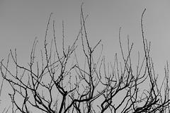 DSC02874 (Zengame) Tags: kameidotenjin rx rx1 rx1r sonydscrx1rsonnart235 sonnart235 sony zeiss japan kameido ソニー ツアイス 亀戸 亀戸天神 日本 東京都 jp