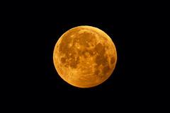 Eclipse de lune 21/01/2019 (Elisabeth Lys) Tags: eclipse nikon sigma d7200 lune moon totallunareclipse lunareclipse astrophotography