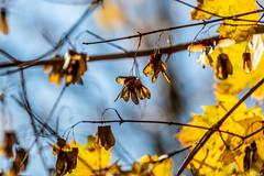 Herbst an der Alb - 5 (Heiko S.) Tags: karlsruhe badenwürttemberg deutschland de herbst alb albtal canon