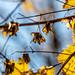 Herbst an der Alb - 5