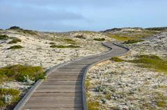 Winding path (afagen) Tags: california pacificgrove asilomarconferencegrounds montereypeninsula asilomar asilomarstatebeach boardwalk