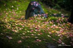 Colors Fallen (Matt Straite Photography) Tags: color fall autumn leaf leaves green rocks focus blur tripod canon 6d 6dmarkii