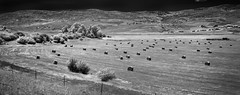 Bailed (arbyreed) Tags: arbyreed infrared 665nanometerinfrared monochromeinfrared bw blackandwhite monochorme hay roundhaybales farming ranching idaho bannockcountyidaho rural