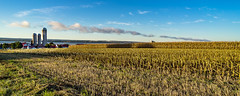 Orleans Island, Quebec, Canada (Agirard) Tags: corn field orleans island quebec canada light sunrise river stlawrence stjean stjohn sony a7ii batis batis18 2818mm 18mm zeiss