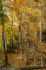 HillsDales2018_DSC_0042 (KKfromBB) Tags: kkfrombb nikon nikond5100 hilldales metropark five rivers metroparks autumn fall 2018 outdoor nature color tree leaf
