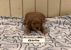Sabrina Girl 11-25