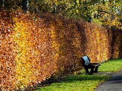 A seat in the autumn sun (leistus) Tags: kingsnorton urban olympusome5ii olympus75f18 kingsnortonpark autumnmorning goldenhour