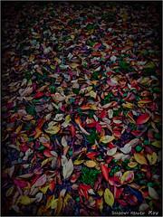 Kaleidoscope... (SHADOWY HEAVEN Aya) Tags: 181107wx3500059 北海道 hokkaido 日本 ファインダー越しの私の世界 写真好きな人と繋がりたい 写真撮ってる人と繋がりたい 写真の奏でる私の世界 coregraphy japan tokyocameraclub igers igersjp phosjapan picsjp dark nature colorful leaf