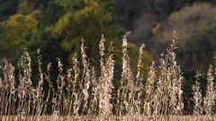 Row (prajpix) Tags: autumn sun light nature farm inverness highlands scotland fields fence agriculture evening rural