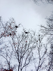 the end of koyo (deziluzija) Tags: branches koyo sky tenryūji