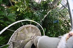 Greenhouse Spiral Staircase (Bri_J) Tags: butterflyhouse greenhouse copenhagenbotanicalgarden botaniskhave universityofcopenhagen copenhagen denmark københavn danmark nikon d7500 spiralstaircase
