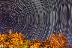 Startrails / @ 18 mm / 2018-08-12 (astrofreak81) Tags: stars tree light night sky startrail startrails star trail sternspuren dark konjunktion konstellation dresden 20180812 sylviomüller sylvio müller astrofreak81