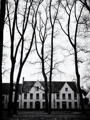 Begijnhof (Feldore) Tags: belgium begijnhof bruges trees architecture sinister nuns medieval belgian spooky feldore mchugh em1 olympus 1240mm community tall traditional houses