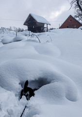 Roofs, Snow and a dog in a hole (Christine Schmitt) Tags: photobomb dog bum tail hole snow winter houses roofs triangles scavenger1 ansh93