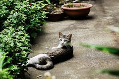 neko-neko2273 (kuro-gin) Tags: cat cats animal japan snap street straycat 猫 gx1
