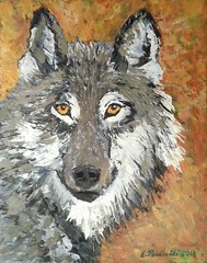 Canis lupus (Wanha-Erkki, Old Eric, Gammal Erik) Tags: susi wolf canislupus lobo loup varg λύκοσ волк kurt