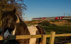 91119 'Bounds Green' at Hensall. (Michael 43123) Tags: ic intercity br british rail railways class 91 91119 bounds green hensall lner