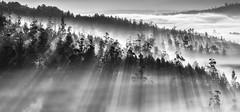 Lampai (Noel F.) Tags: galicia galiza sony a7r a7rii ii fe 100400 gm teo lampai carcacia fog neboa sunrise sunrays mencer