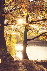 Indian Summer -Autumn (Light and shade by Monika) Tags: autumn light sun lichtspiel farbenspiel farben münsterland landschaft nature