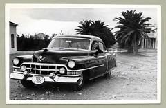 1951 Cadillac Series 62 (Vintage Cars & People) Tags: vintage classic photo foto photography automobile car cars motor vehicle antique cadillac 1949cadillac caddy fashion 1950s fifties palmtrees village tropics tropical