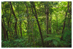 HWL-02139 (hlydecker) Tags: sony sonya7rii australia summer travel travelphotography nature photography naturephotography wild forest green trees