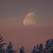 A quarter moon