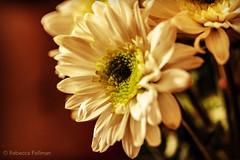 Flower. #Takoma #dc #dclife #washingtondc #iphone #iPhonemacro #macro  #flower #flowersofinstagram (Kindle Girl) Tags: iphone takoma dc dclife washingtondc iphonemacro macro flower flowersofinstagram