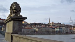 Széchenyi Chain Bridge (Normann) Tags: hungary budapest bridge statue lion